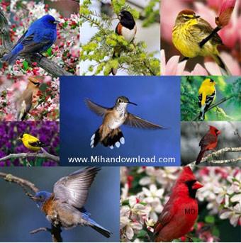 Birds Wallpapers عکس هایی زیبا از طبیعت پرندگان