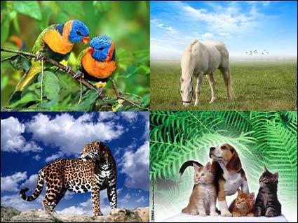 111%20Wallpapers%20Nature 111 والپیپر زیبا از طبیعت و دنیای حیوانات