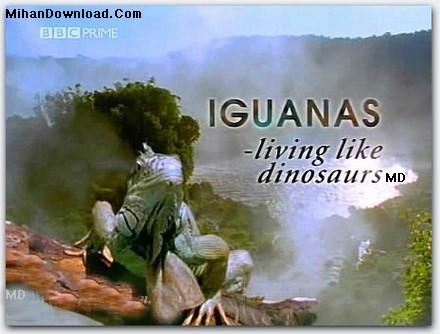 BBC%20Iguanas%20Living%20like%20Dinosaurs فيلم مستند دايناسور و خزندگان BBC Iguanas Living like Dinosaurs