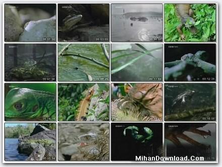 BBC%20Iguanas%20Living%20like%20Dinosaurs2 فيلم مستند دايناسور و خزندگان BBC Iguanas Living like Dinosaurs