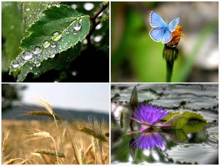 Plants%20Wallpapers%20HQ 93 والپیپر از تصاویر زیبای طبیعت Plants Wallpapers HQ