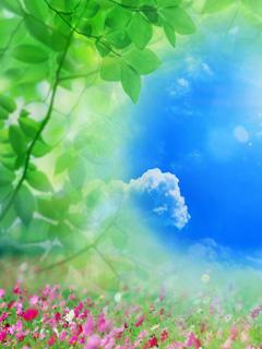 Nature %20%287%29 دانلود مجموعه ای زیبا از عکس گل و گیاه