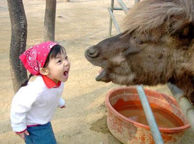 donkey دانلود 5 كليپ بسيار خنده دار موبايل