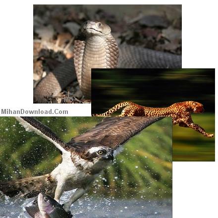 wild%5BMihanDownload.Com%5D فيلم مستند راز بقا (  مستند حيات وحش امريكاي جنوبي) Wild South America