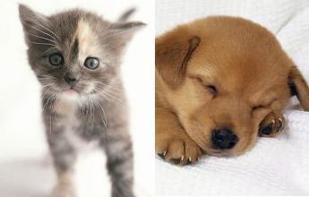 عكس هاي جديد با موضوع سگ و گربه Picture New