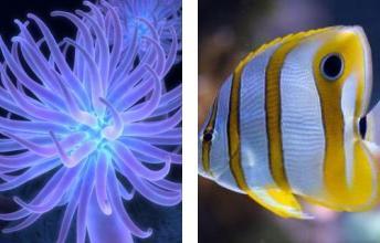 پس زمینه با موضوع دنیای زیر آب