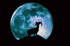 69 عکس های جدید موبایل با موض حیوانات